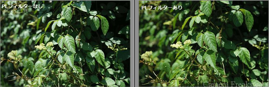 PLフィルターの反射を抑えた写真