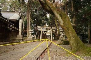 一眼レフの基本的な構図である放射構図を使って撮影した神社の境内の写真