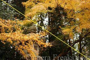 一眼レフの基本的な構図である対角構図を利用して撮影した神社の境内の風景写真