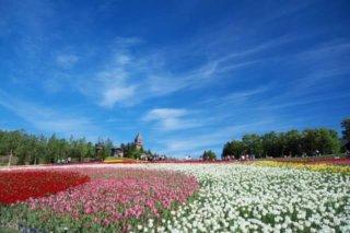 超広角レンズで撮影したお花畑の写真