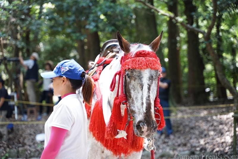 近江神宮の流鏑馬の白馬