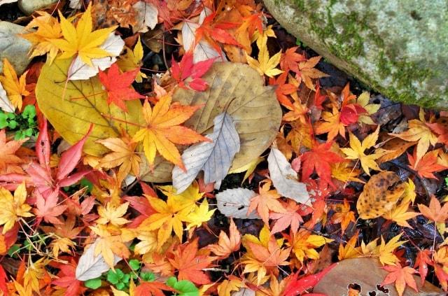 一眼レフで落ち葉を撮る