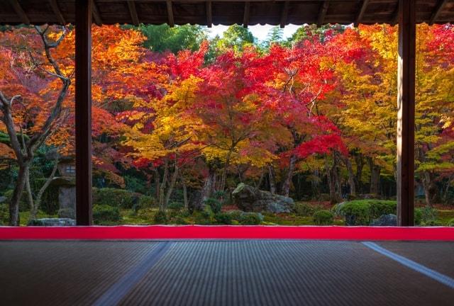 お寺の中から一眼レフで紅葉を撮影した写真
