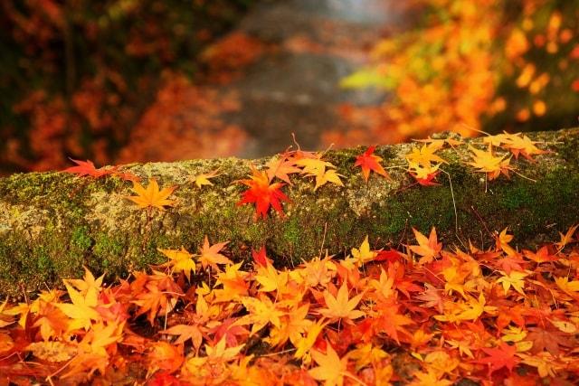 一眼レフで落ち葉の紅葉を狙う