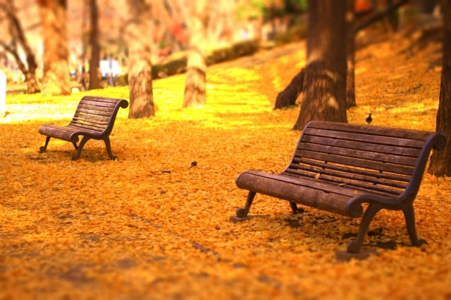 一眼レフで紅葉とでベンチを撮影した写真