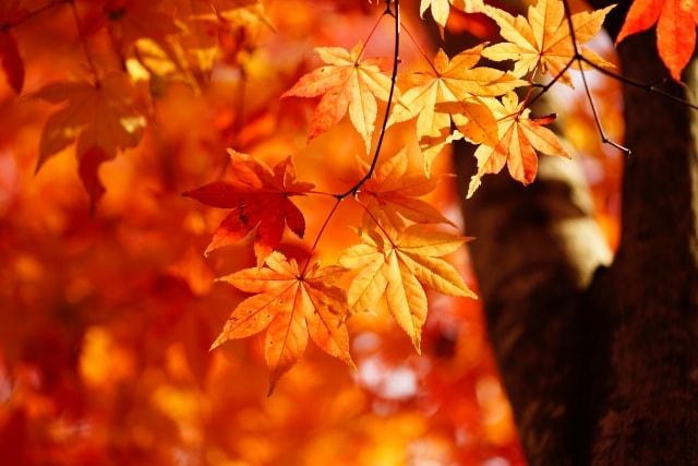 一眼レフで紅葉を逆光で撮影した写真