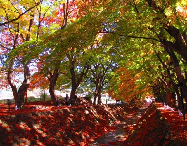 一眼レフで紅葉をサイド光で撮影した写真
