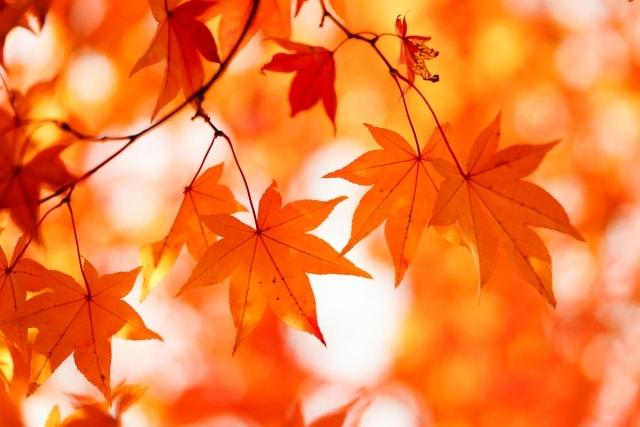 プラス補正で撮影した紅葉の写真