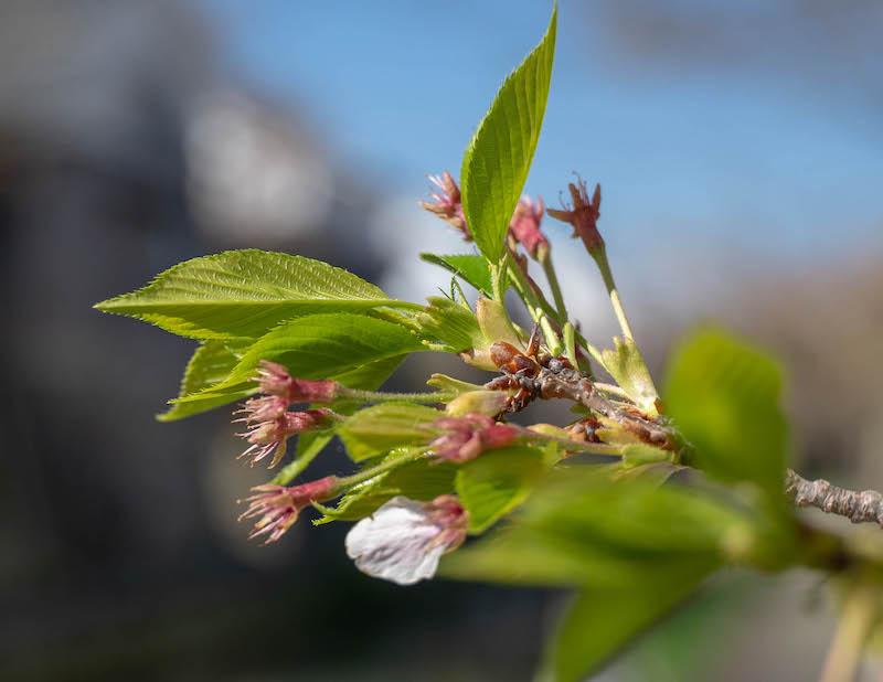 α7 Ⅲで撮影した花の写真のアップ