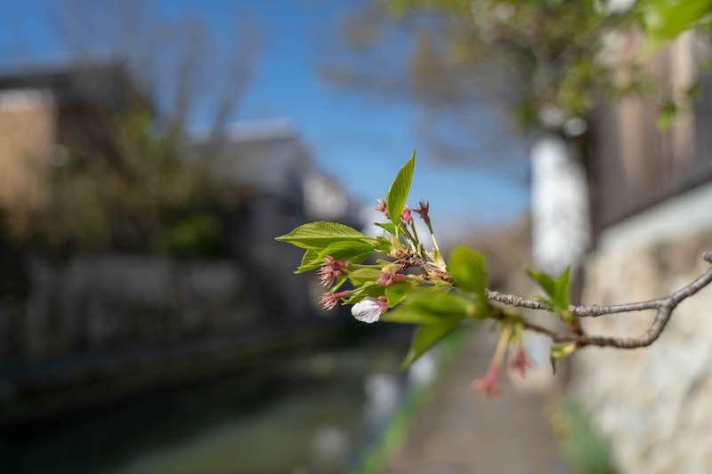 α7 Ⅲで撮影した花の写真