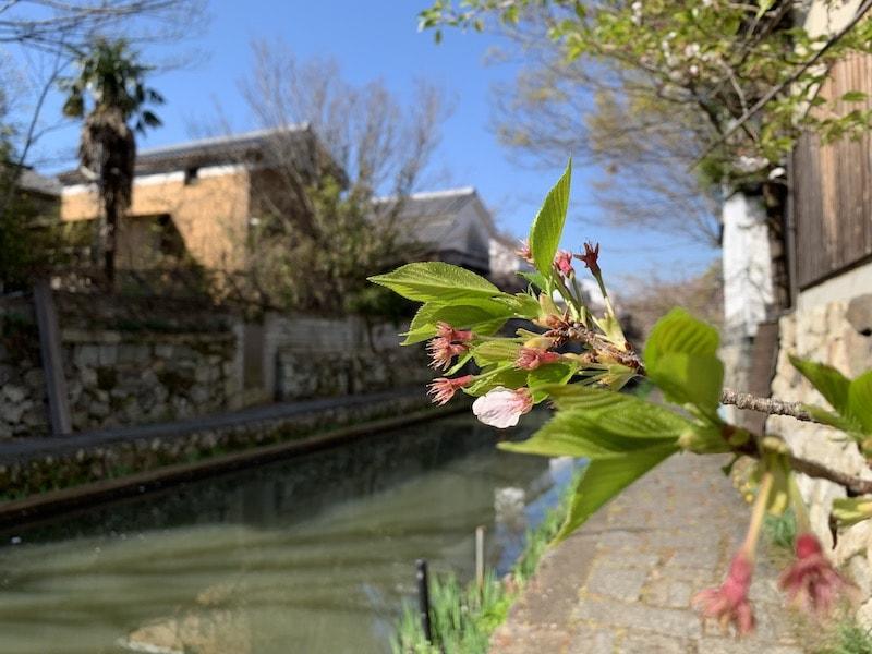 iPhone XSで撮影した花の写真
