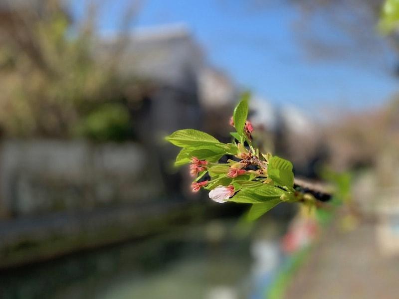 iPhone XSのポートレートモードで撮影した花の写真